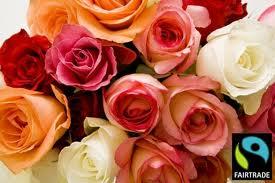 rose fairtrade