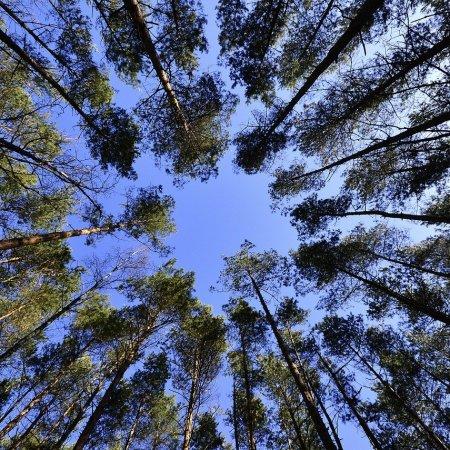 foresta pixabay alberi